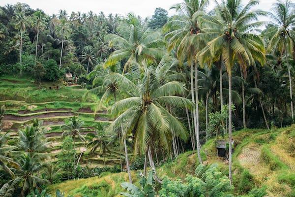 Tegallalang Rice Terraces Read more at: https://choosingchia.com//www.bali-indonesia.com/ubud/tegallalang-rice-terraces.htm?cid=ch:OTH:001